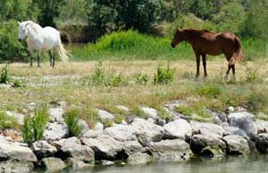 Camargue Boat Hire