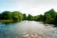 A narrow stretch of the River Shannon